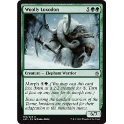 Woolly Loxodon