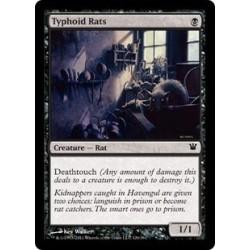Typhoid Rats