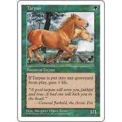 Tarpan