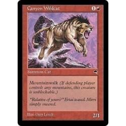 Canyon Wildcat