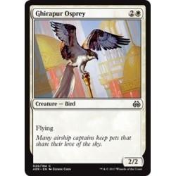 Ghirapur Osprey