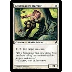 Goldmeadow Harrier