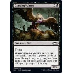 Gorging Vulture